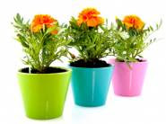 Buy 1 Get 1 Free Flower Seeds + Rs. 100 Off On Rs. 100 And Above